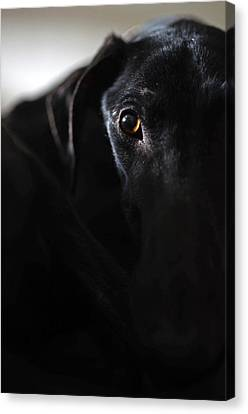 Rescued Greyhound Canvas Print - Hounding Misery The Misfortune by Nano Calvo