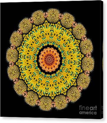 Kaleidoscope Ernst Haeckl Sea Life Series Canvas Print by Amy Cicconi