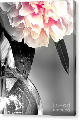 Peony Canvas Print by France Laliberte