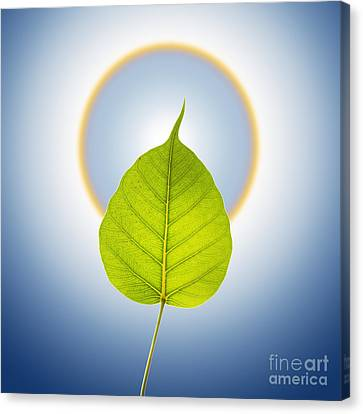 Foliage Canvas Print - Pho Or Bodhi by Atiketta Sangasaeng