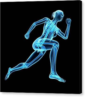Skeletal System Of Jogger Canvas Print