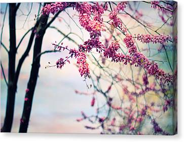Spring Blossom Canvas Print by Jessica Jenney