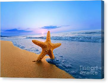 Starfish Canvas Print by Michal Bednarek
