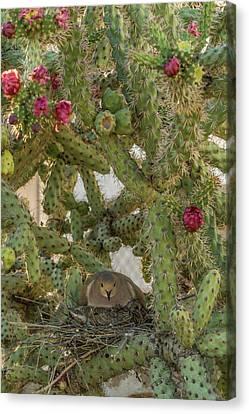 Usa, Arizona, Sonoran Desert Canvas Print by Jaynes Gallery