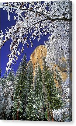 Usa, California, Yosemite National Park Canvas Print