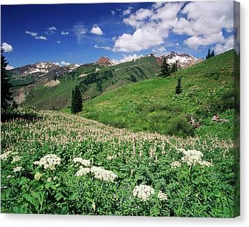 Usa, Colorado, Gunnison National Canvas Print by Adam Jones