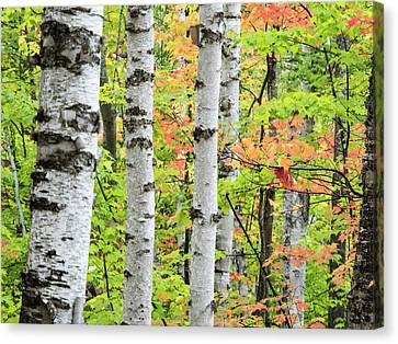 Usa, Michigan, Upper Peninsula Canvas Print by Julie Eggers