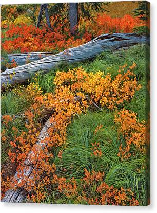 Usa, Oregon, Willamette National Forest Canvas Print