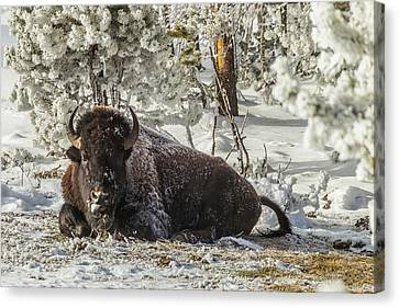 Usa, Wyoming, Yellowstone National Park Canvas Print by Jaynes Gallery
