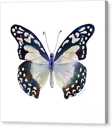90 Angola White Lady Butterfly Canvas Print by Amy Kirkpatrick