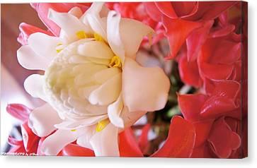 Flower For You  Canvas Print by Gornganogphatchara Kalapun