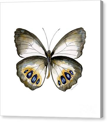 95 Palmfly Butterfly Canvas Print by Amy Kirkpatrick
