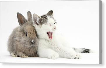 Kitten And Rabbit Canvas Print by Mark Taylor