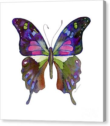 98 Graphium Weiskei Butterfly Canvas Print by Amy Kirkpatrick