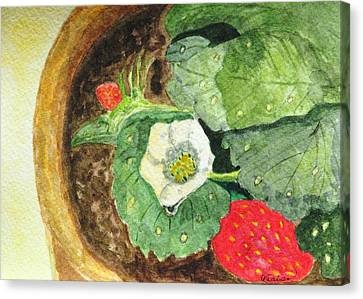 Canvas Print featuring the painting A Balcony Strawberry Plant by Angela Davies
