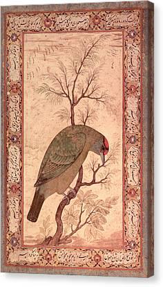 A Barbet Himalayan Blue-throated Bird Jahangir Period, Mughal, 1615 Canvas Print by Mansur