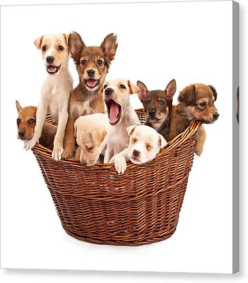 Small Basket Canvas Print - A Basket Of Puppies  by Susan Schmitz