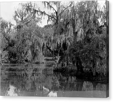 A Bayou Scene In Louisiana Canvas Print
