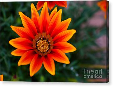 A Beautiful Beginning Canvas Print by Syed Aqueel