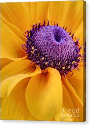 Coneflower Canvas Print - A Beautiful Black Eye by Heidi Smith
