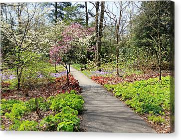 A Beautiful Spring Walk Canvas Print by Trina  Ansel
