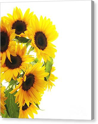 Artificial Flowers Wholesale Canvas Print - A Beautiful Sunflower by Boon Mee