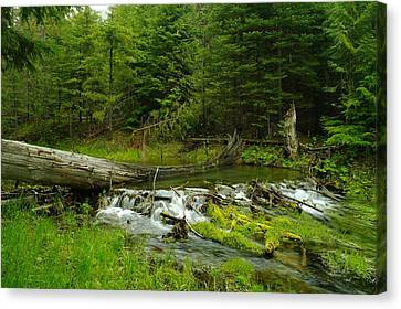 A Beaver Dam Overflowing Canvas Print
