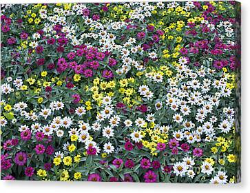 A Bed Of Color  Canvas Print by Tim Gainey
