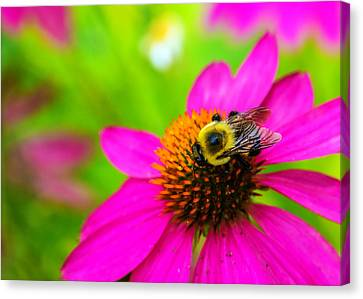 A Bee And Reverie Canvas Print by Jon Woodhams