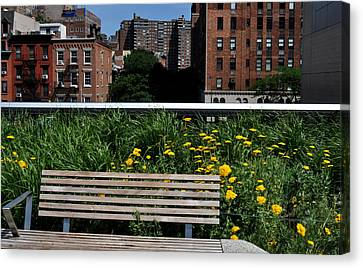 A Bench On The High Line In New York City Canvas Print by Diane Lent
