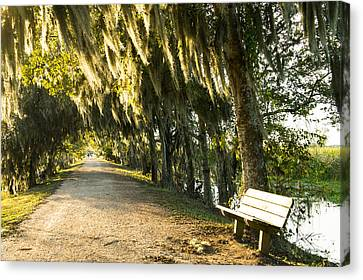 A Bench Under Golden Spanish Moss Canvas Print by Ellie Teramoto