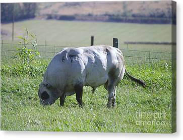 A Big Big Bull  Canvas Print by Jeff Swan