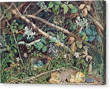 A Birds Nest Among Brambles Canvas Print
