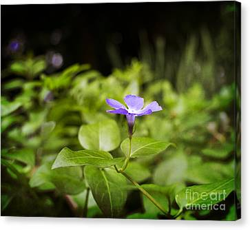 Canvas Print featuring the photograph A Bit Of Purple by Maria Janicki