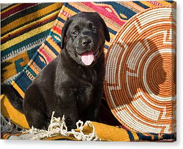 A Black Labrador Retriever Puppy Canvas Print by Zandria Muench Beraldo