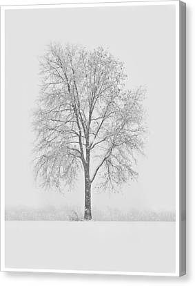 A Blizzard Moment Canvas Print by Nancy Edwards