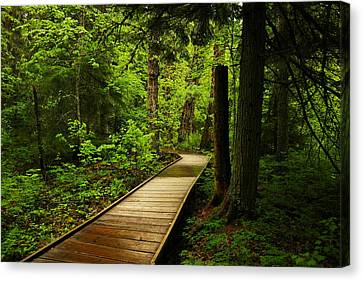 A Boardwalk To Paradise Canvas Print by Jeff Swan