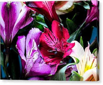 A Bouquet Of Peruvian Lilies Canvas Print by Donna Lee
