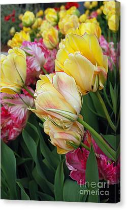 A Bouquet Of Tulips For You Canvas Print by Eva Kaufman