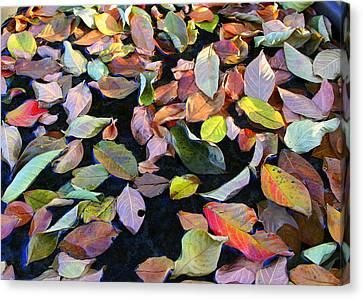 A Bowl Of Autumn Canvas Print by Paula Tohline Calhoun