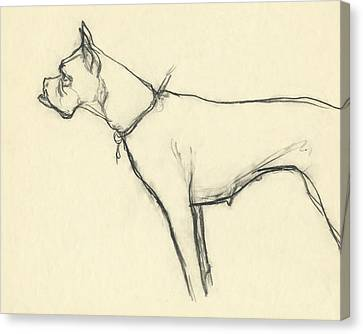 A Boxer Dog Canvas Print by Carl Eric Erickson