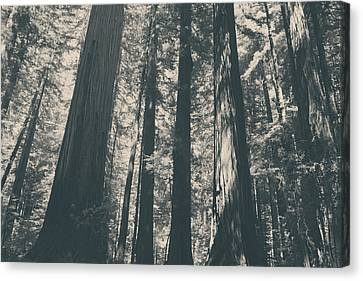 A Breath Of Fresh Air Canvas Print by Laurie Search