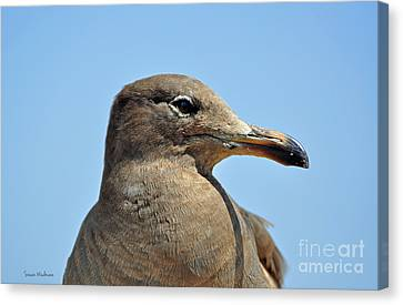 A Brown Gull In Profile Canvas Print