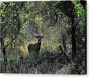 A Buck Digital Art Canvas Print by Ernie Echols