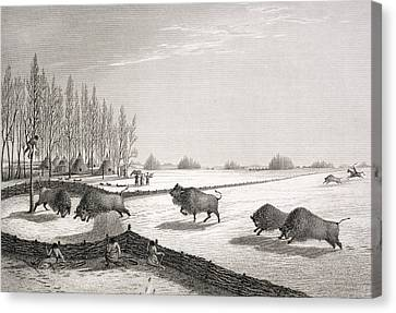 Prey Canvas Print - A Buffalo Pound by George Back