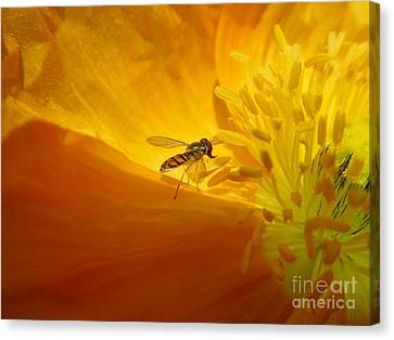 A Bug And A Green Inner Glow Canvas Print by Chad and Stacey Hall