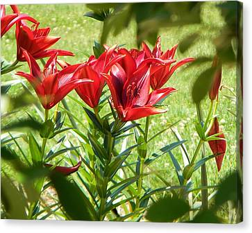 Canvas Print featuring the photograph A Burst Of Red by Jean Goodwin Brooks