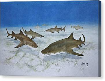 A Bushel Of Lemon Sharks Canvas Print by Jeff Lucas