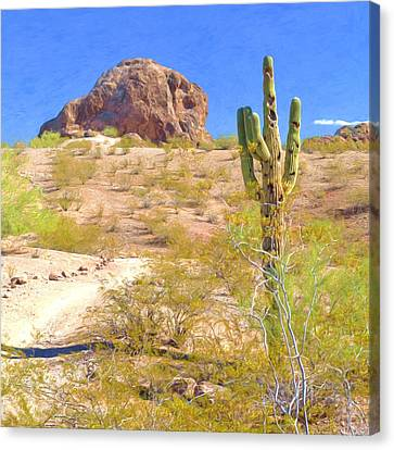 A Cactus In The Arizona Desert Canvas Print