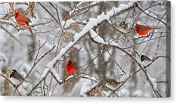 A Cardinal Snow Canvas Print